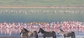 Resa till Tanzania