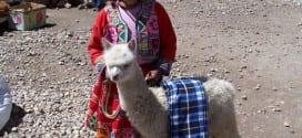 Flicka med sin alpacka utanför Cusco i Peru